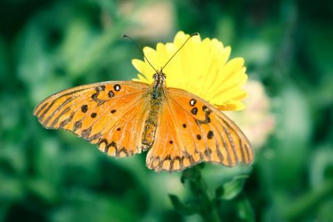 Surprenants papillons